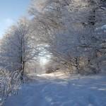 Zimową porą na Hrobaczej Łące